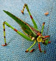 Brian the 32 Spotted Katydid by ozplasmic