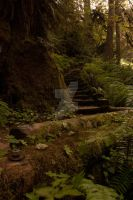 Mossy Staircase by Tegatana