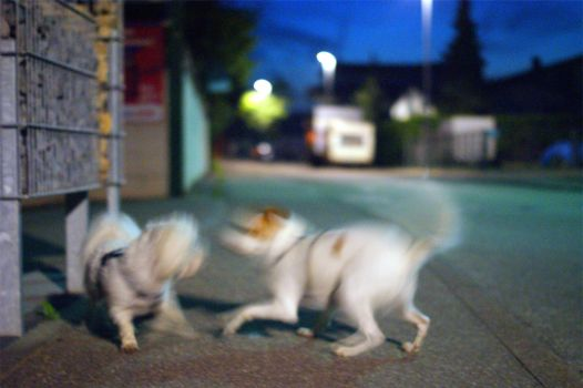 My Dogs At Night by PEACEBRAKER
