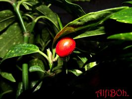 Berry Drop..1 by AlfiBOh