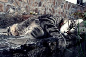 Lazy Purrfect Sunday by Gia9