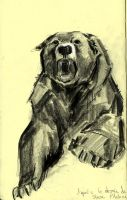 Bear by Ophelie-c