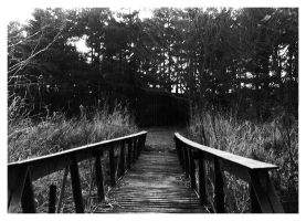 bridge to the woods by pilas14