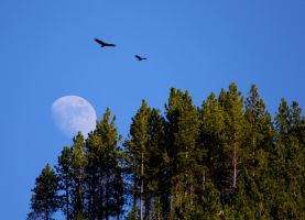 Flying Over the Moon by Bokotsu