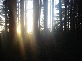sunset through the trees by Panda20091011