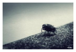 The Fly by kingshrestha