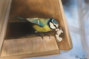 Blue Tit by Jacia