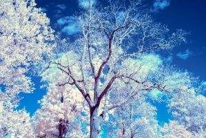 Infrared Tree by TJValentino
