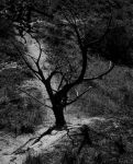 Gothic Tree by skulls-for-angels