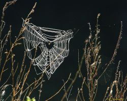 Early morning webs by natureguy