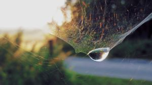 World in a Water Drop Wallpaper by martinemes