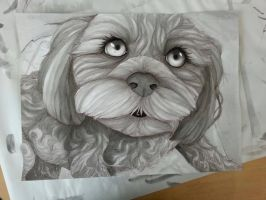 Portrait of my Dog - India Ink by ShirraPikachu
