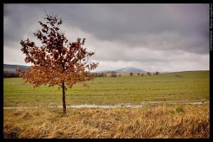 Cloudy tree by mjagiellicz