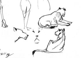 013011 Zoo sketches by Asatira