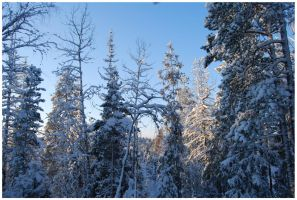 Winter Afternoon 14 by Eirian-stock