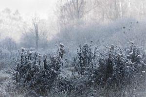 First Frost by GalagoDeCodi