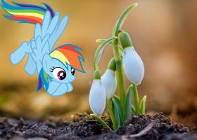 Spring is Here by normanb88