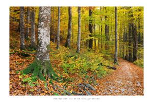 Plitvice Lakes 2012 - VII by DimensionSeven