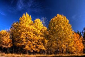 Fall Colours 2 by JoeJoeBob