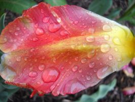 Flower in the rain 3 by marlirae