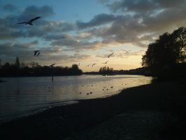 The  River Thames at Chiswick by loganmiracle