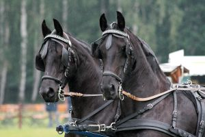 Friesian Carriage 01 by neverFading-stock
