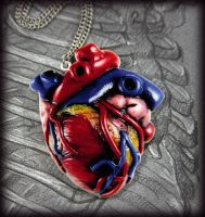 2D Anatomical Heart by NeverlandJewelry
