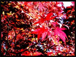 Japanese Maple Tree by HarmoniousReprise