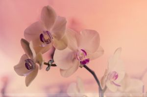 orchidaceae by prismatic-heart