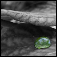 Terrace - Drop on a Tree Peony by michelv