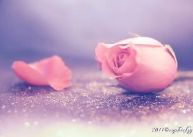 Pink Rose bokeh by Sophie-Y