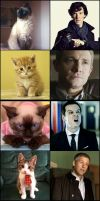 The Cats of BBC Sherlock by OrminLange