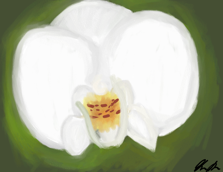 WhiteOrchid 4tiff by Sasume001