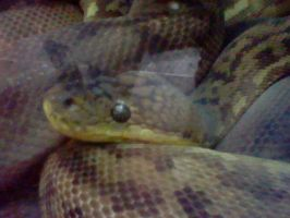 Ground Boa by SNlCKERS