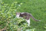 The elusive 3 legged cat (2) by sabresteen