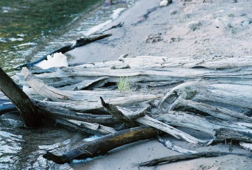 Fresh Water Drift Wood- Marion Lake, Upper MI by Noorieibrahim