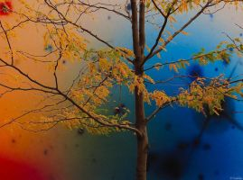Fall Color by MacroMagnificent