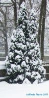 Evergreen With Snow by youlittlemonkey
