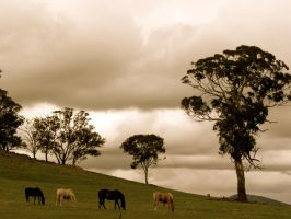 Horse Hill by kittymccourt