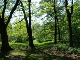 Woods in Sweikhuizen 2 by BMFMhero1991