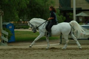 grey arabian dressage by HollyChaotic-Stock