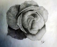 rose by Bobby-castaldi-art