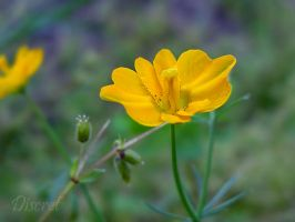 Yellow Flower by discret