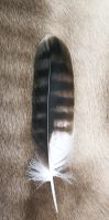 Martial Eagle feather by Featheroes