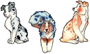 Australian Shepherds by FigBeater