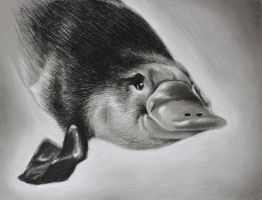 Platypus by Indybreeze