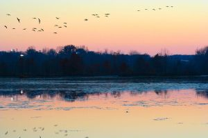 Sunset Geese by Dellessanna