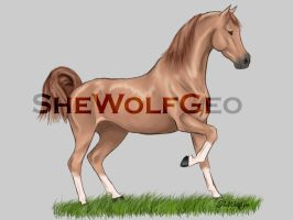 VHR: Chestnut Arabian by SheWolfGeo