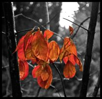 leafs ... by tanares8