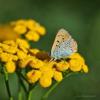 the last breath of summer XIV by JoannaRzeznikowska